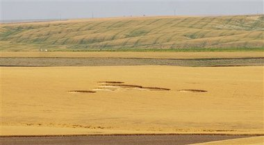 Photo of Crop Circle in Eastern Washington State.