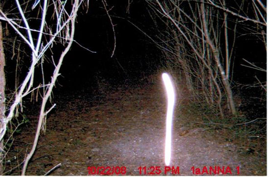 GAME CAMERA PHOTO SHOWING STRANGE LIGHT PATTERN.