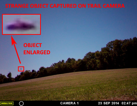PHOTO & ENLARGEMENT OF DISK SHAPED OBJECT ON TRAIL CAMERA.
