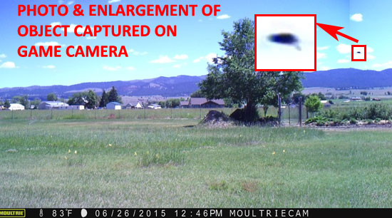 PHOTO & ENLARGEMENT OF OBJECT CAPTURED BY GAME CAMERA.