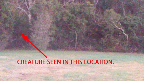 1 OF PHOTOS SHOWING WHERE CREATURE IS SPOTTED.