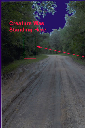 Photo of Curve on Road Where Creature Was Standing