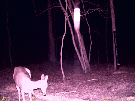 Game Camera Photo of Deer & Unknown Light.