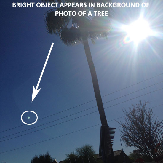 BRIGHT OBJECT APPEARS IN BACKGROUND OF PHOTO OF A TREE.