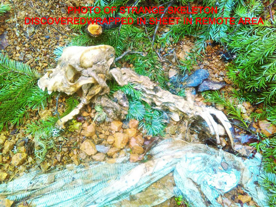 PHOTO OF STRANGE SKELETON FOUND WRAPPED IN SHEET IN REMOTE AREA.