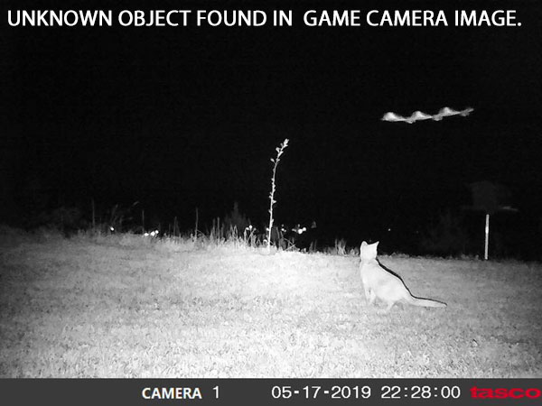 UNKNOWN WAVY OBJECT FOUND IN GAME CAMERA IMAGE.